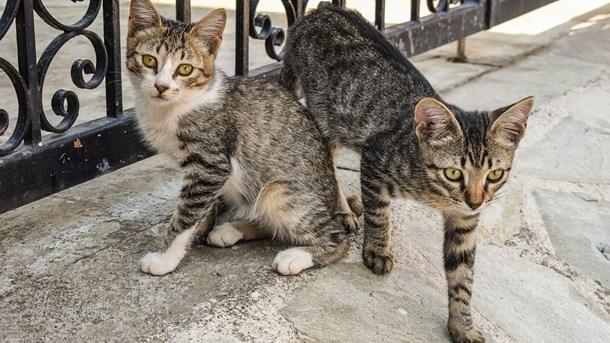 lavede lovson og kat op er ariana grande dating 2015